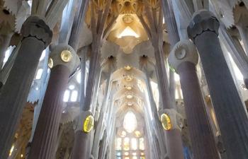 サグラダファミリア聖堂天井